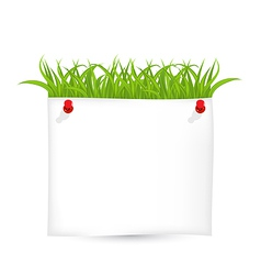 Paper sheet with green grass vector image vector image