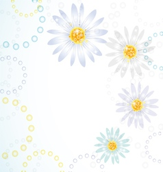 daisy flowers on the greeting card vector image