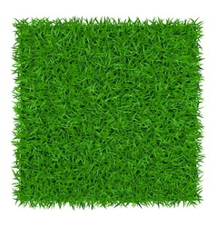 Green grass background 1 vector