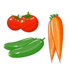 Set of vegetables of tomatoes carrots and vector
