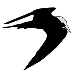 black silhouette of tern vector image
