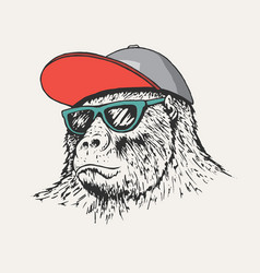 Gorilla wearing a cap and sunglasses vector