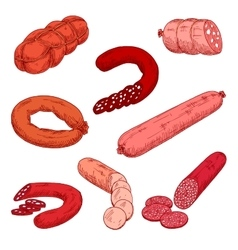 Sausage meat products like wurst or kielbasa vector