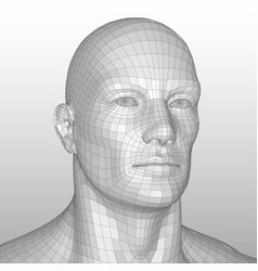 wire frame polygonal human head vector image