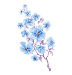 Blue flowers branch watercolor vector image vector image