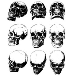 detailed graphic black and white human skulls set vector image vector image