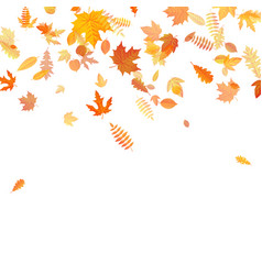 autumn background with golden maple oak and vector image