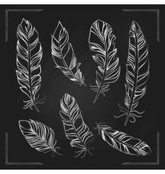 Feathers drawn with chalk on a blackboard vector