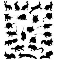 Rodents vector