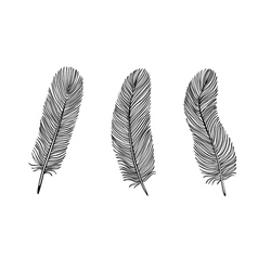 set black and white feather vector image