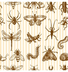 Insects sketch seamless pattern monochrome vector image vector image