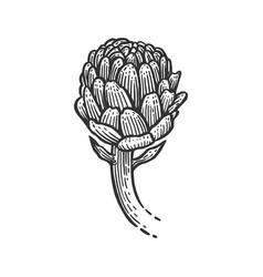 Artichoke sketch engraving vector