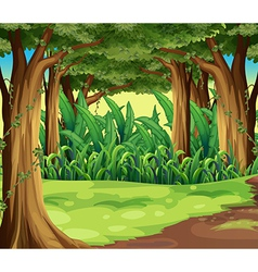 Giant trees in the forest vector image