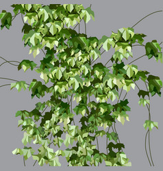 Painted green ivy plant on a gray wall vector