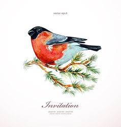 watercolor painting bullfinch on branch pine vector image vector image