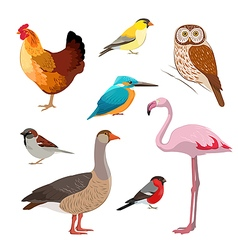 Colorful realistic bird collection vector image