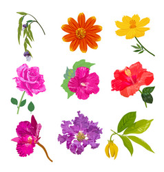 colorful realistic flower isolated collection set vector image
