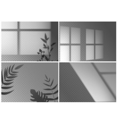 realistic window shadow monstera leaves palm vector image