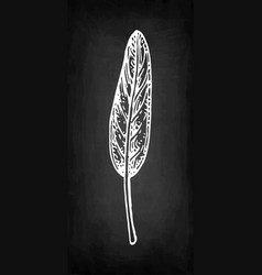 Sage chalk sketch vector