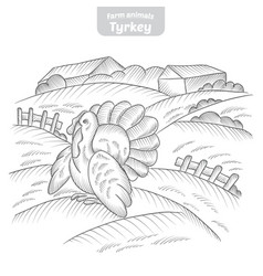 turkey hand-drawn vector image