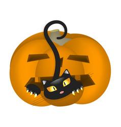 pumpkin scares cat vector image