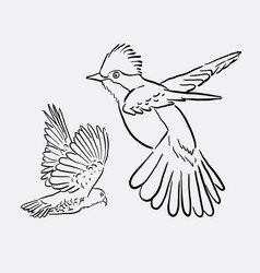 bird animal flying drawing style vector image