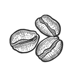 coffee beans sketch engraving vector image