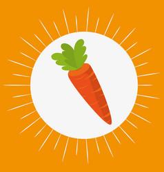fresh carrot vegetables menu vector image