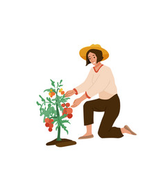 woman farmer want tear off ripe tomato from plant vector image