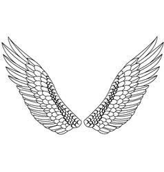 Wings vector image vector image