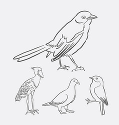bird poultry animal hand drawing style vector image