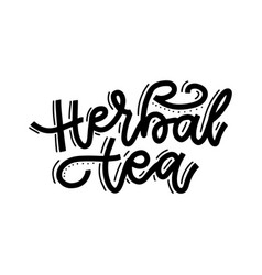 herbal tea linear calligraphy hand drawn vector image