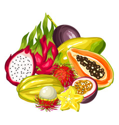 exotic tropical fruits collection of vector image