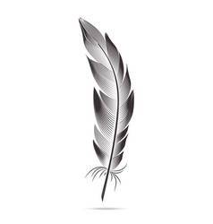 Black and white feathers graph contour vector