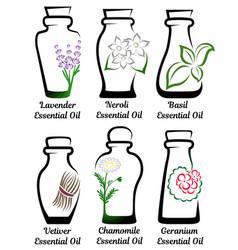 Set essential oils part 2 vector