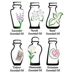 set of essential oils part 2 vector image