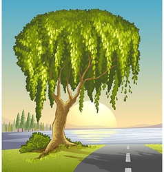 A big tree at the road vector