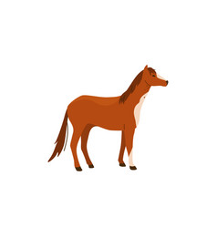 Brown horse stand isolated vector