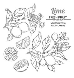 lime branches set vector image