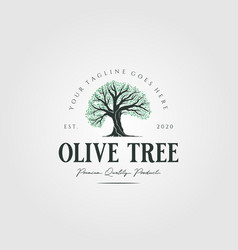 vintage olive tree nature logo design vector image