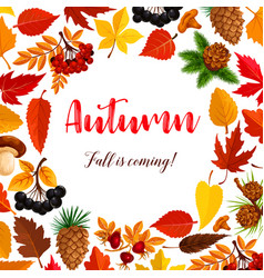 autumn poster of leaf fall or forest berry vector image
