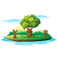 An island with three playful rabbits vector image