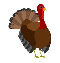 Isolated thanksgiving turkey bird vector