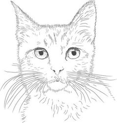 Line drawing cat vector
