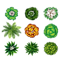 A group of plants vector image