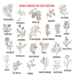 Best herbal remedies for yeast infection vector
