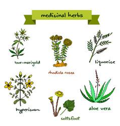 Medicinal plants hand drawn vector