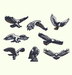 set eagles vector image
