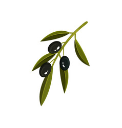 small green sprig with three black olives and vector image