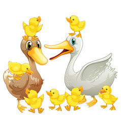 Duck family with little ducklings vector